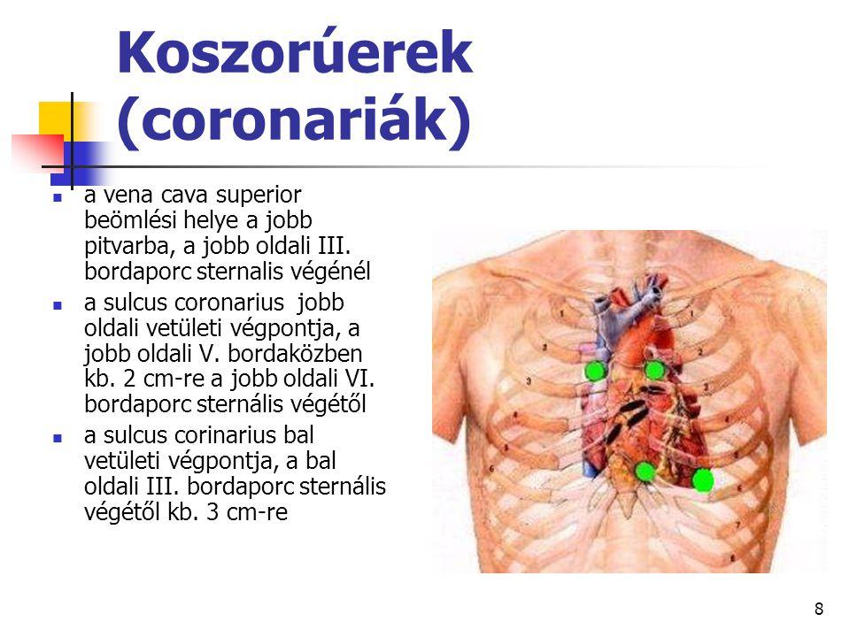 8 Koszorúerek (coronariák) a vena cava superior beömlési helye a jobb pitvarba, a jobb oldali III. bordaporc sternalis végénél a sulcus coronarius job