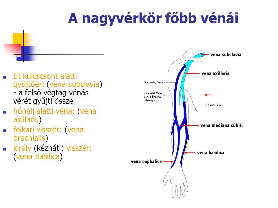81 A nagyvérkör főbb vénái b) kulcscsont alatti gyűjtőér: (vena subclavia) - a felső végtag vénás vérét gyűjti össze hónalj alatti véna: (vena axillar