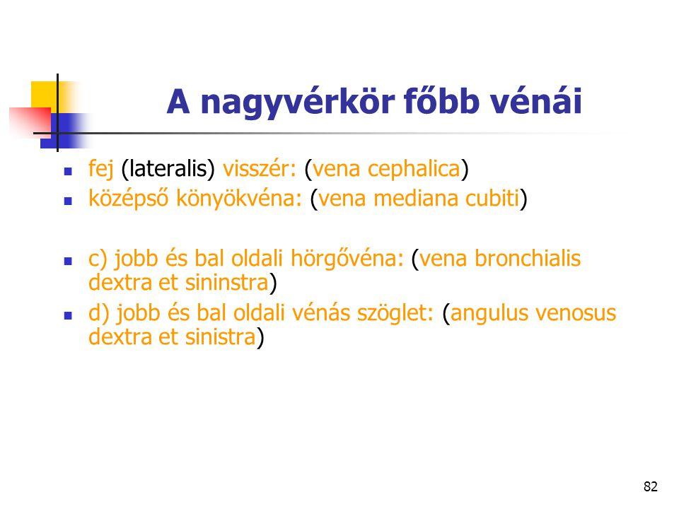 82 A nagyvérkör főbb vénái fej (lateralis) visszér: (vena cephalica) középső könyökvéna: (vena mediana cubiti) c) jobb és bal oldali hörgővéna: (vena