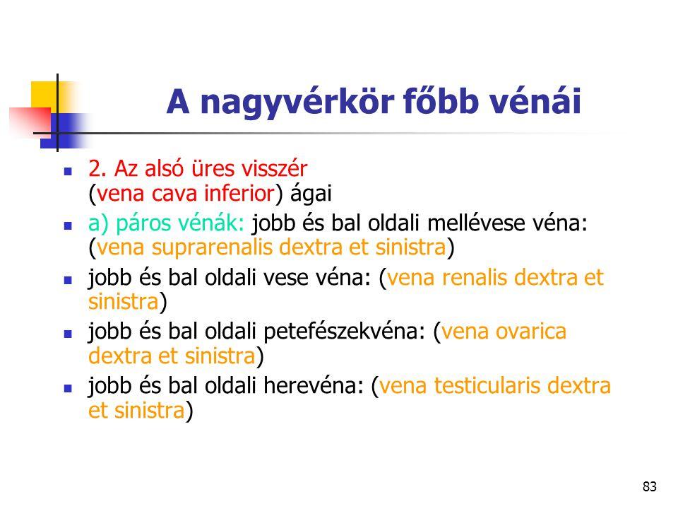 83 A nagyvérkör főbb vénái 2. Az alsó üres visszér (vena cava inferior) ágai a) páros vénák: jobb és bal oldali mellévese véna: (vena suprarenalis dex