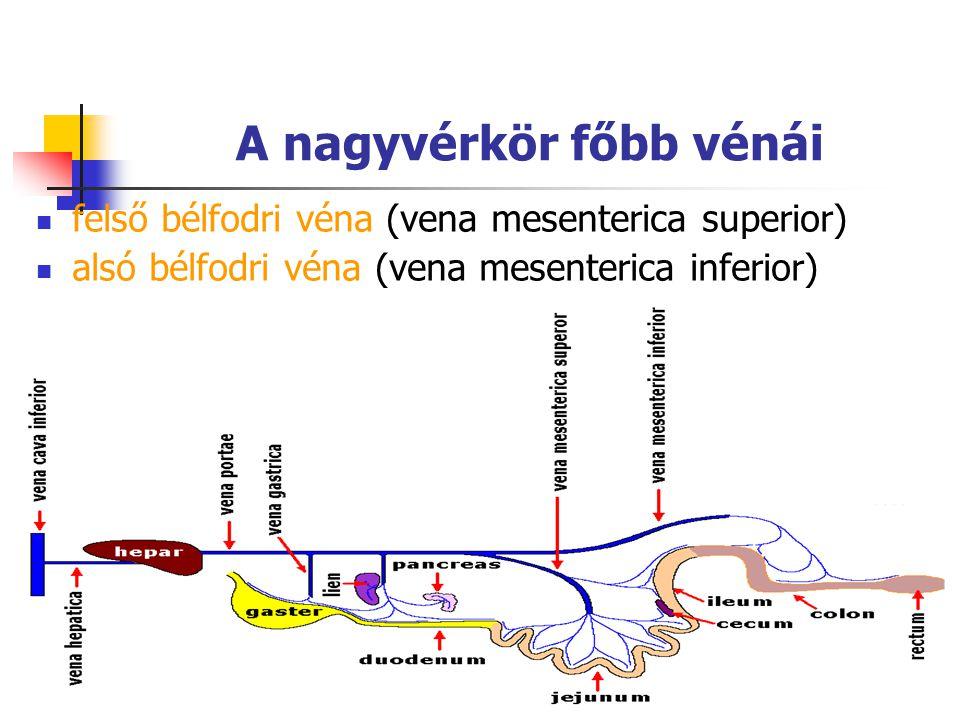 86 A nagyvérkör főbb vénái felső bélfodri véna (vena mesenterica superior) alsó bélfodri véna (vena mesenterica inferior)
