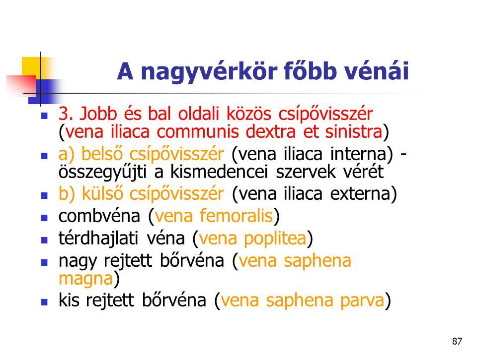 87 A nagyvérkör főbb vénái 3. Jobb és bal oldali közös csípővisszér (vena iliaca communis dextra et sinistra) a) belső csípővisszér (vena iliaca inter