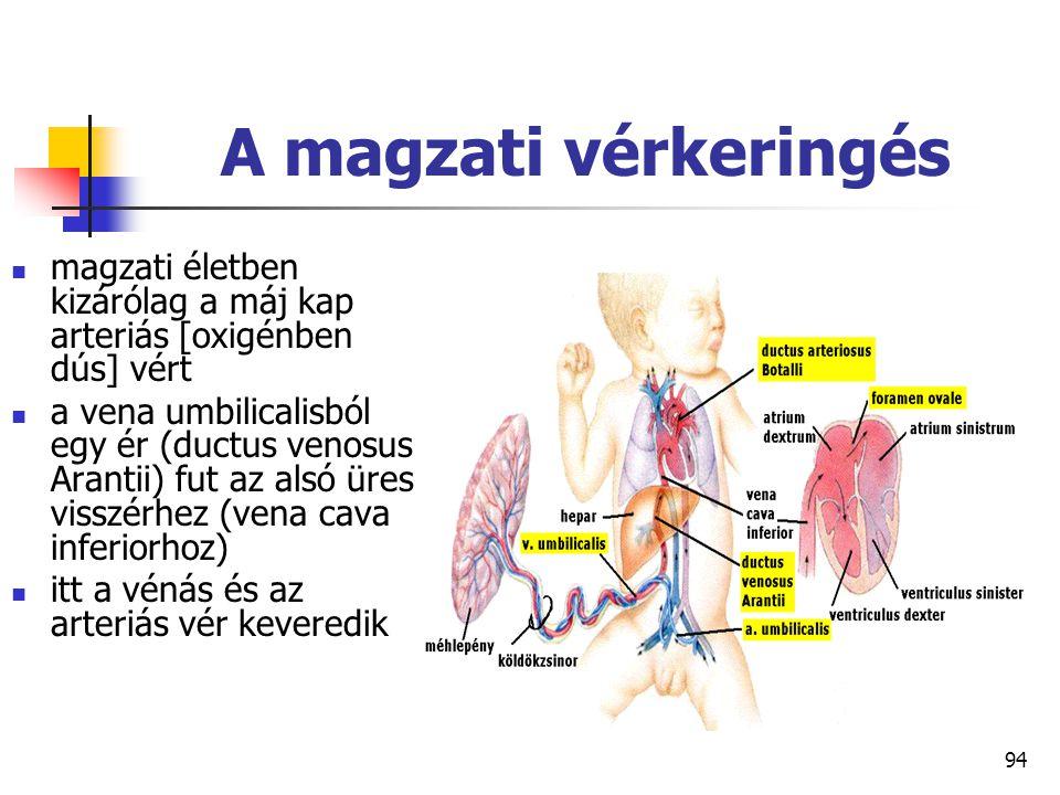 94 A magzati vérkeringés magzati életben kizárólag a máj kap arteriás [oxigénben dús] vért a vena umbilicalisból egy ér (ductus venosus Arantii) fut a