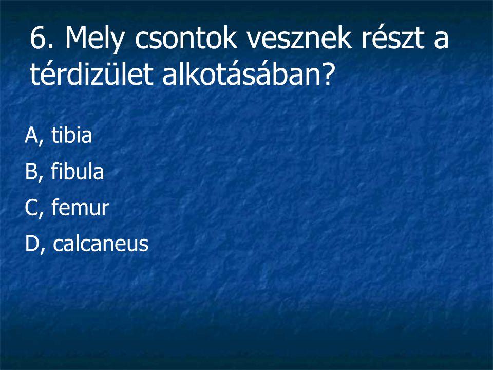 6. Mely csontok vesznek részt a térdizület alkotásában? A, tibia B, fibula C, femur D, calcaneus
