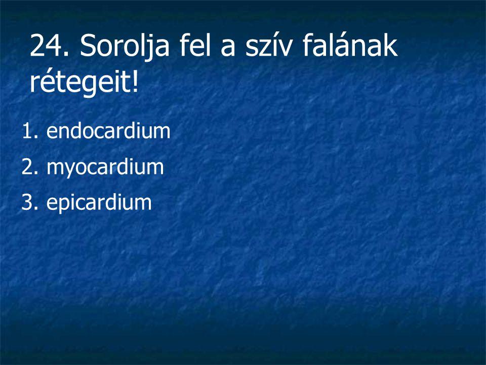 24. Sorolja fel a szív falának rétegeit! 1. endocardium 2. myocardium 3. epicardium