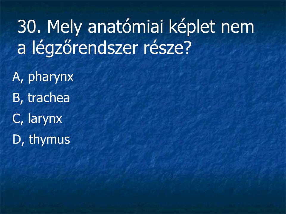 30. Mely anatómiai képlet nem a légzőrendszer része? A, pharynx B, trachea C, larynx D, thymus