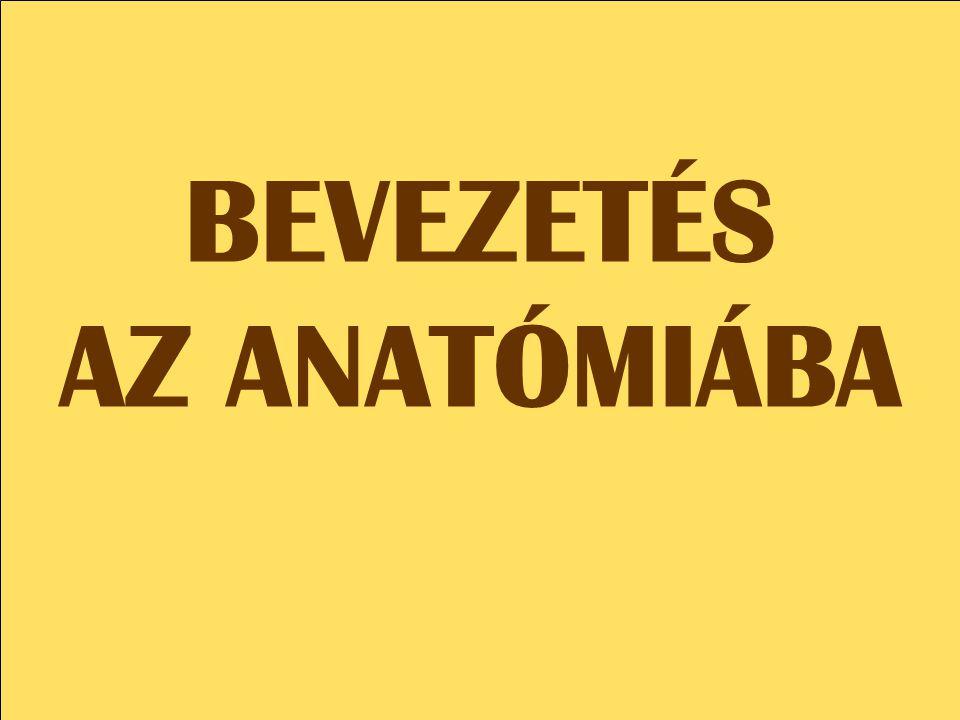 BEVEZETÉS AZ ANATÓMIÁBA