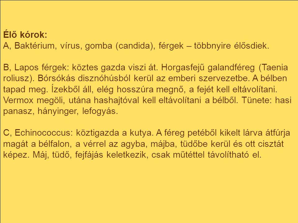 Élő kórok: A, Baktérium, vírus, gomba (candida), férgek – többnyire élősdiek. B, Lapos férgek: köztes gazda viszi át. Horgasfejű galandféreg (Taenia r