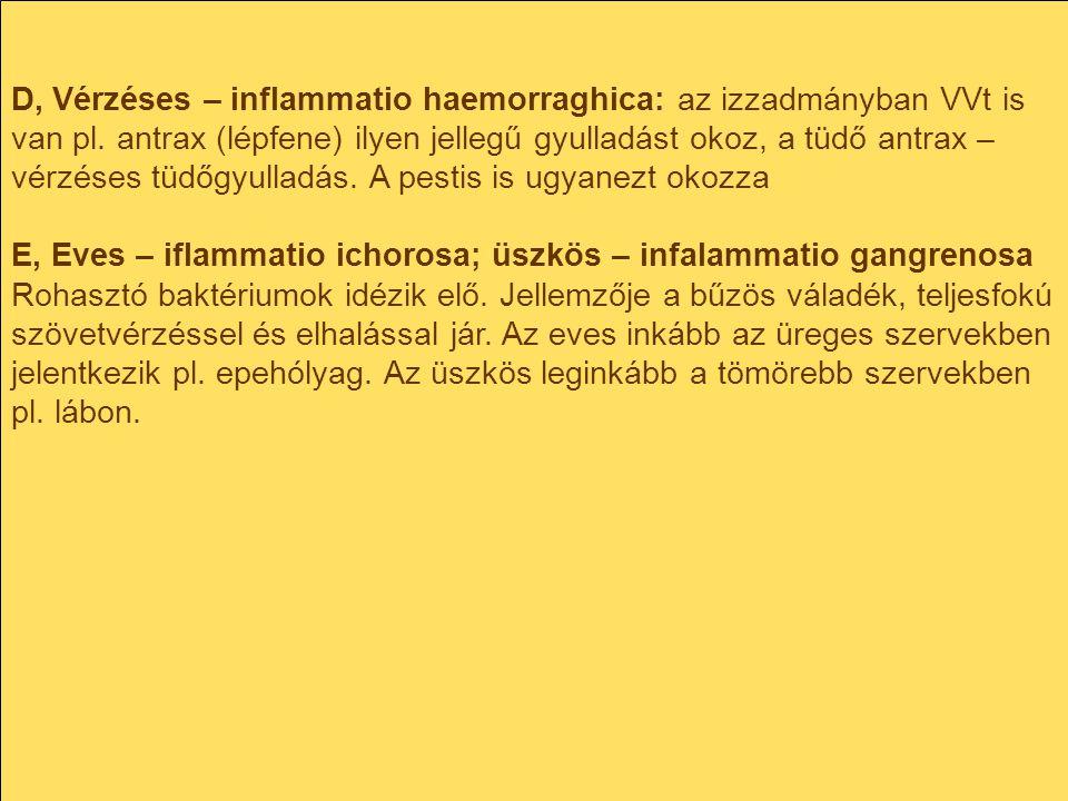 D, Vérzéses – inflammatio haemorraghica: az izzadmányban VVt is van pl. antrax (lépfene) ilyen jellegű gyulladást okoz, a tüdő antrax – vérzéses tüdőg