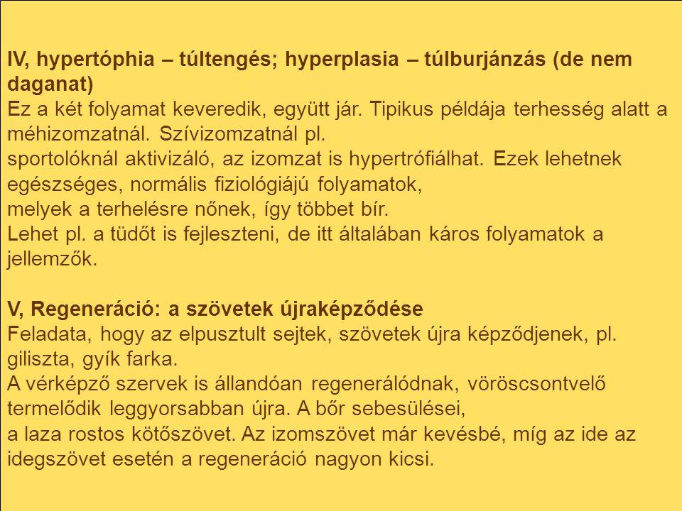 IV, hypertóphia – túltengés; hyperplasia – túlburjánzás (de nem daganat) Ez a két folyamat keveredik, együtt jár. Tipikus példája terhesség alatt a mé