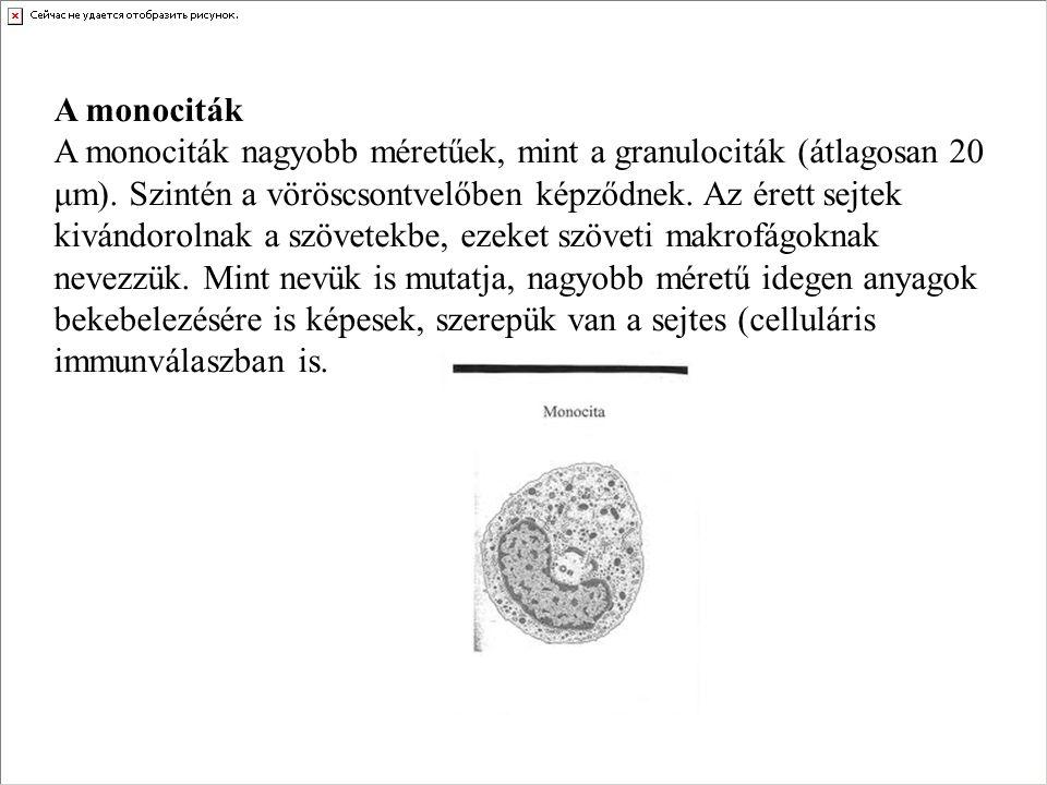 A monociták A monociták nagyobb méretűek, mint a granulociták (átlagosan 20 μm). Szintén a vöröscsontvelőben képződnek. Az érett sejtek kivándorolnak