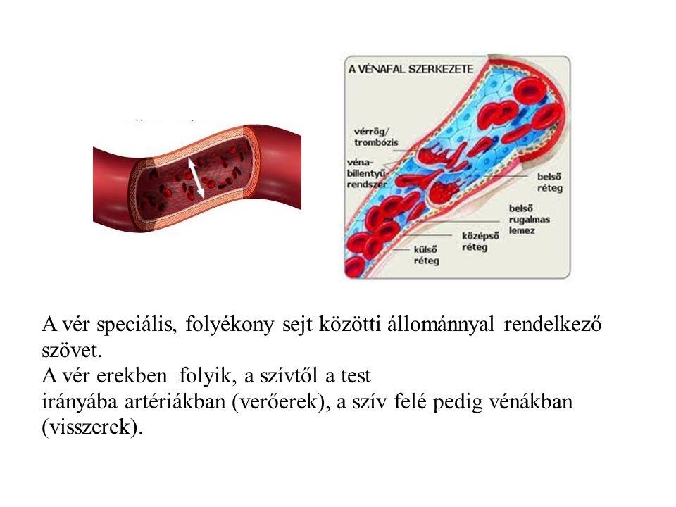 A vér speciális, folyékony sejt közötti állománnyal rendelkező szövet. A vér erekben folyik, a szívtől a test irányába artériákban (verőerek), a szív