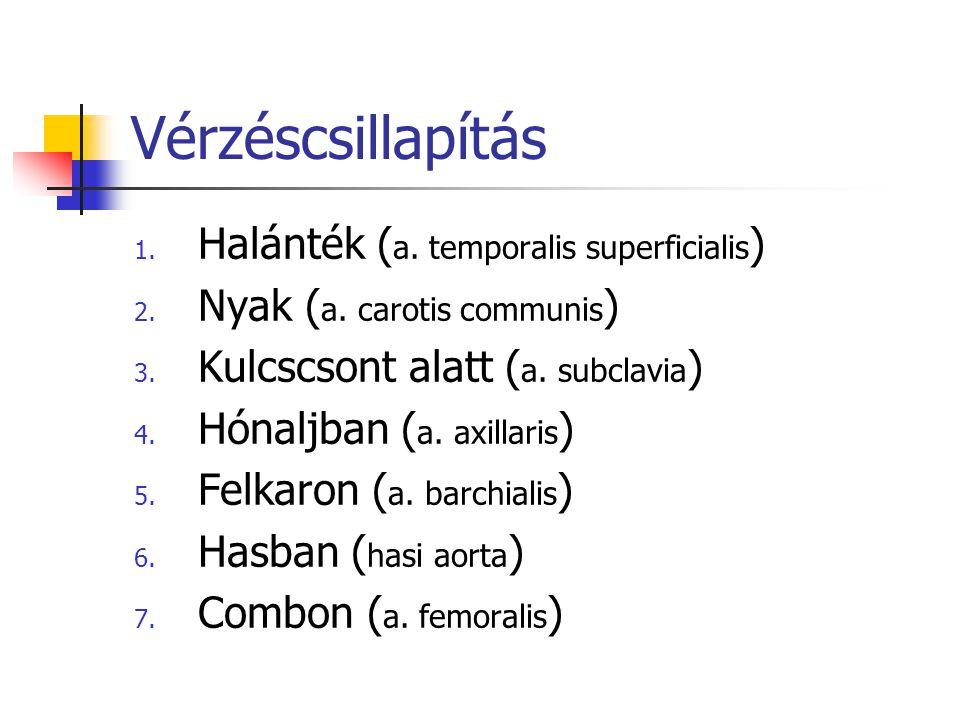 Vérzéscsillapítás 1.Halánték ( a. temporalis superficialis ) 2.