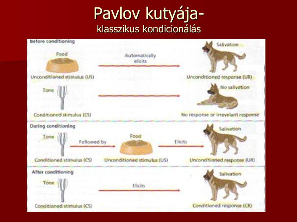 Pavlov kutyája- klasszikus kondicionálás