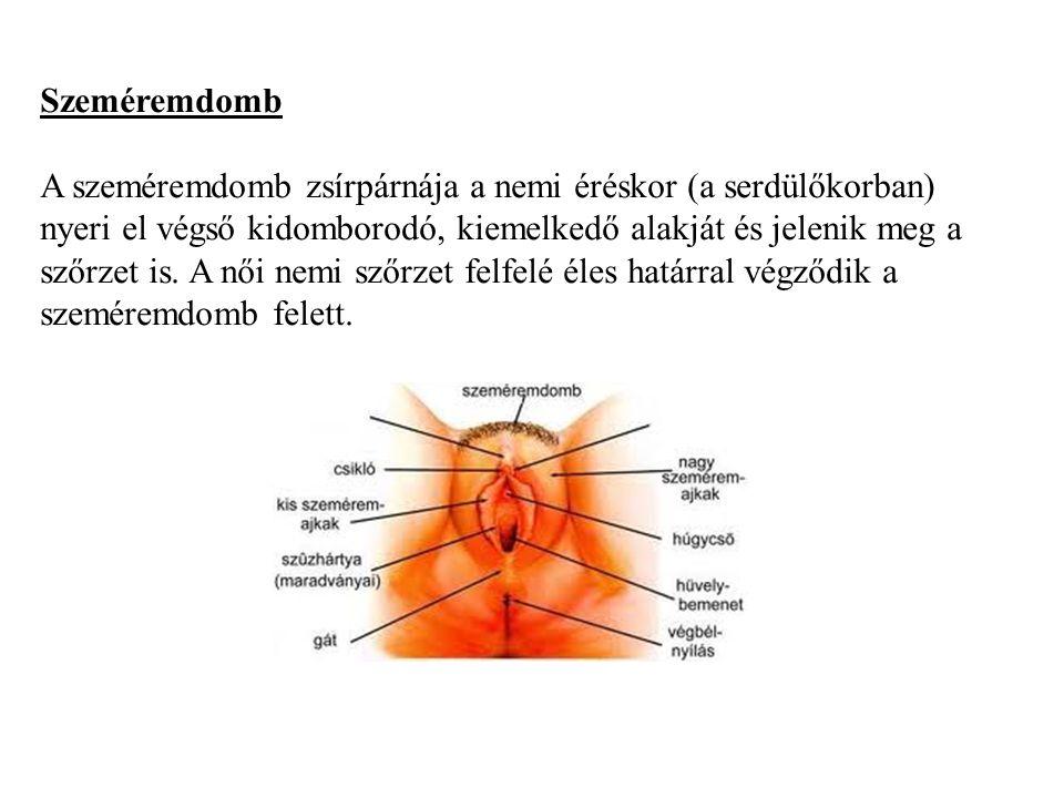 Szeméremajkak A szőrzet kétoldalt kiterjed a nagy szeméremajkakra is.