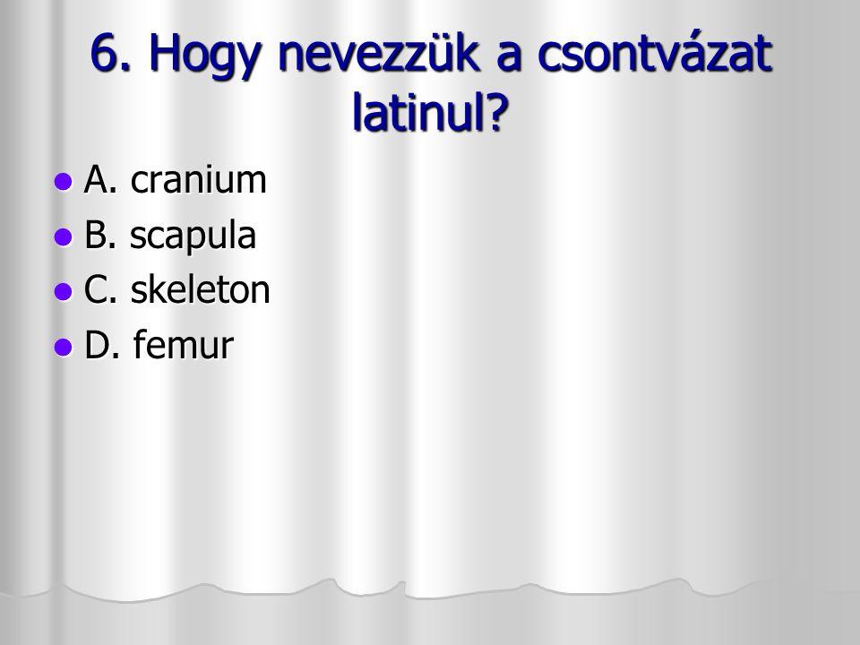 6. Hogy nevezzük a csontvázat latinul? 6. Hogy nevezzük a csontvázat latinul? A. cranium A. cranium B. scapula B. scapula C. skeleton C. skeleton D. f