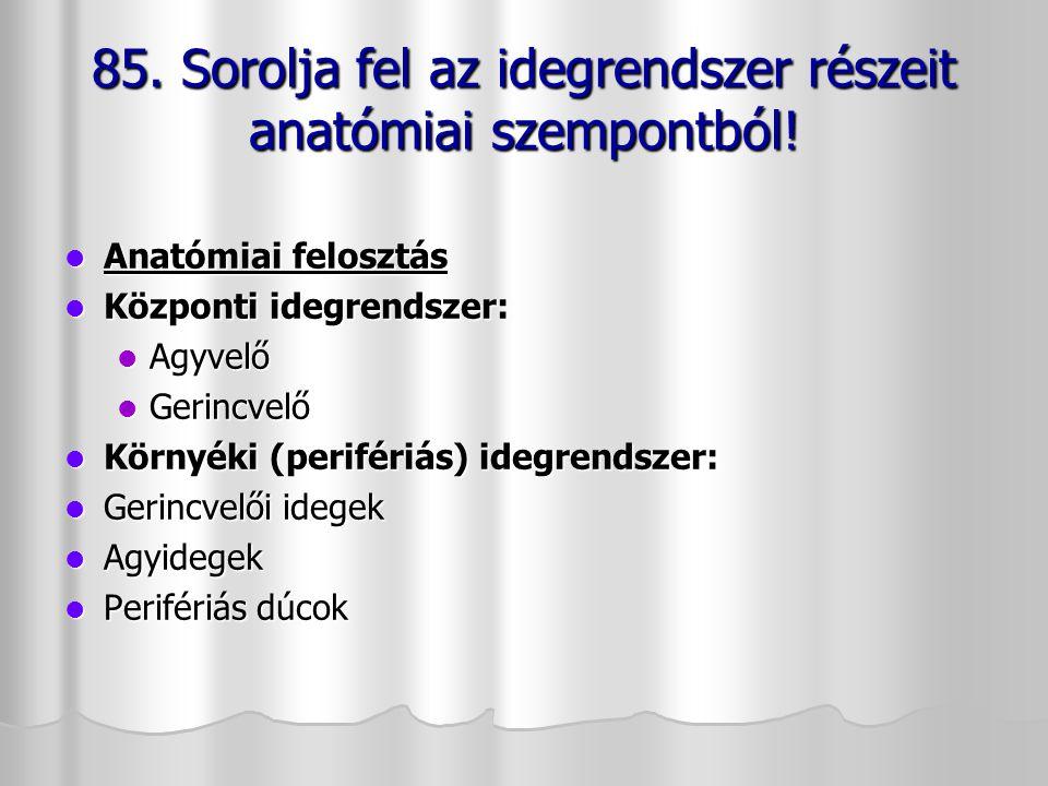 Anatómiai felosztás Anatómiai felosztás Központi idegrendszer: Központi idegrendszer: Agyvelő Agyvelő Gerincvelő Gerincvelő Környéki (perifériás) ideg