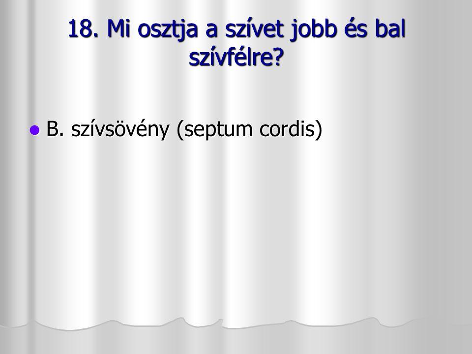 18. Mi osztja a szívet jobb és bal szívfélre? B. szívsövény (septum cordis) B. szívsövény (septum cordis)