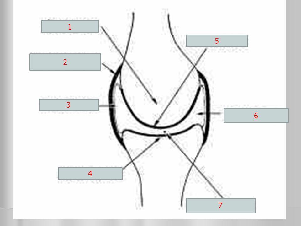 10.Melyik állítás helytelen. B. A mozgásrendszer aktív része a csontvázrendszer.