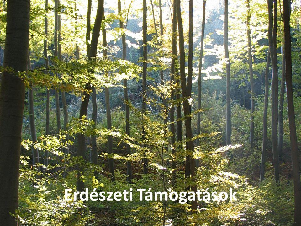 Szúrópróbaszerű, kockázatelemzésen alapuló ellenőrzések; Objektívebb döntést biztosító jogszabályi környezet; Az erdőtervezés során a társadalmi vélem