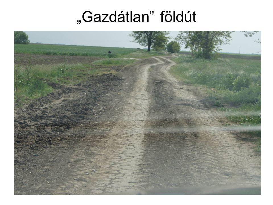 """Gazdátlan"" földút"