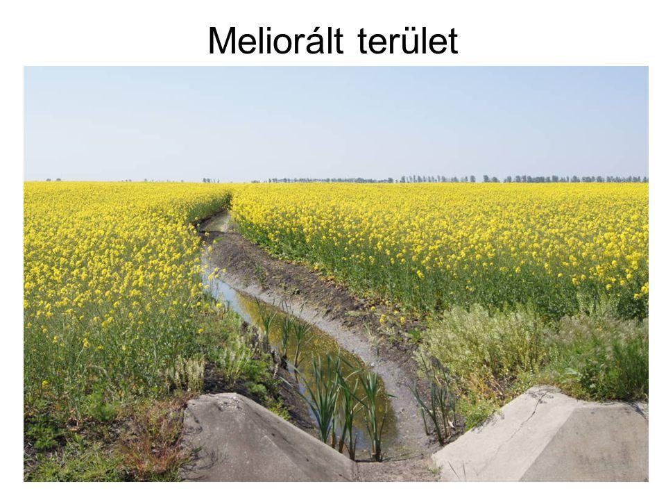 Meliorált terület