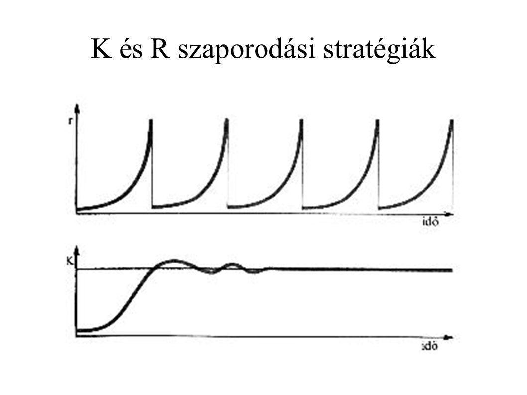 K és R szaporodási stratégiák
