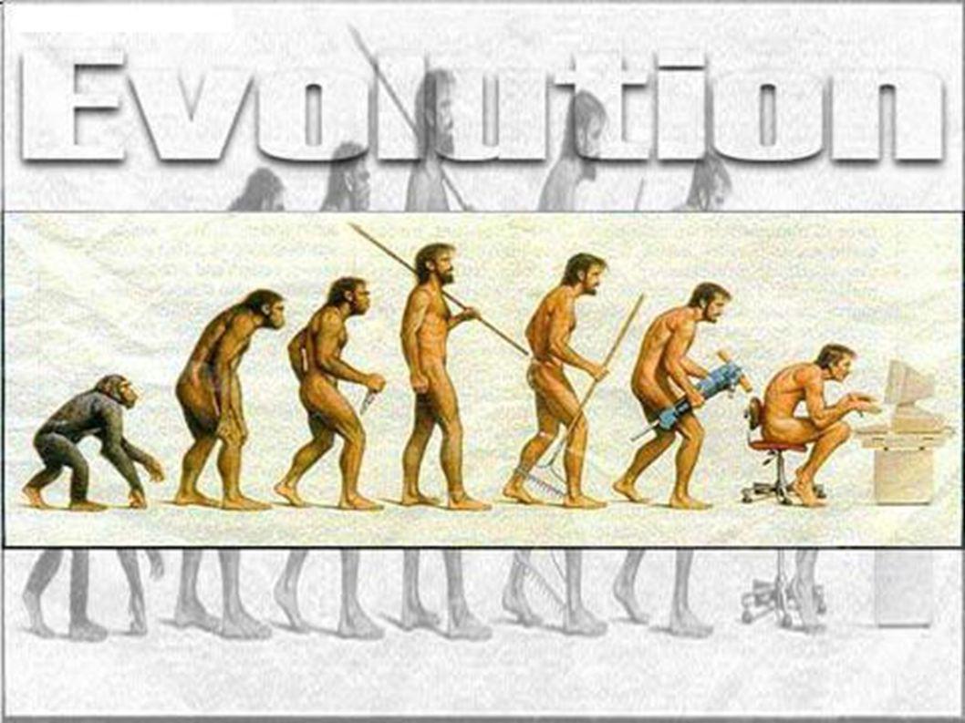 Az evolúció során a fajok lét- és fajfenntartása egyre nagyobb hatékonysággal és gazdaságossággal megy végbe és az erre való törekvés az evolúció egyik mozgatórugója ( BORHIDI A.
