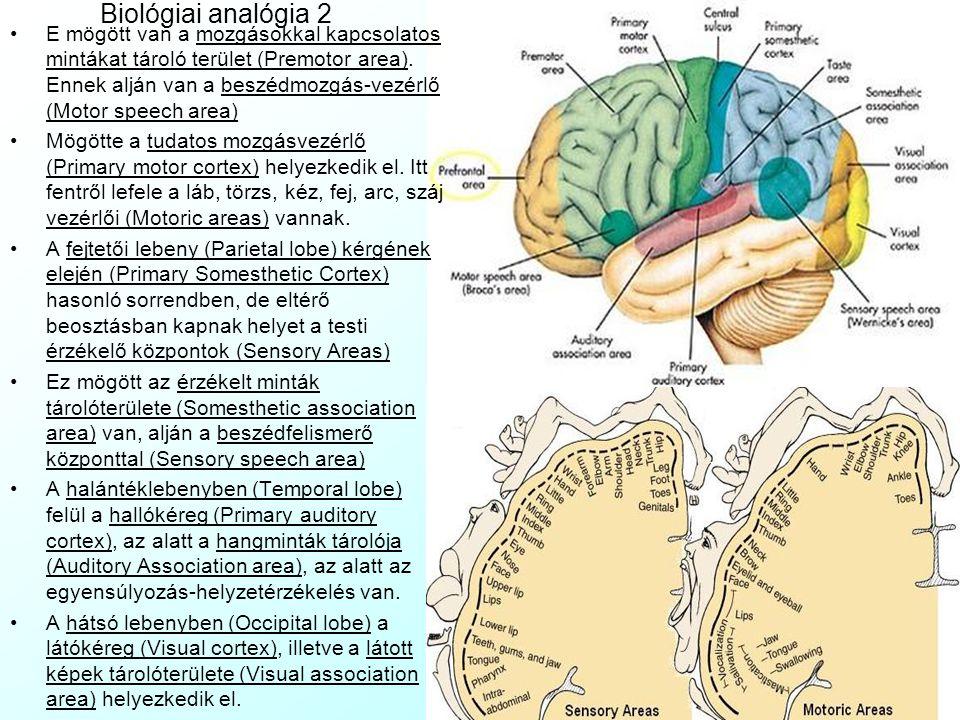 Biológiai analógia 2 E mögött van a mozgásokkal kapcsolatos mintákat tároló terület (Premotor area).