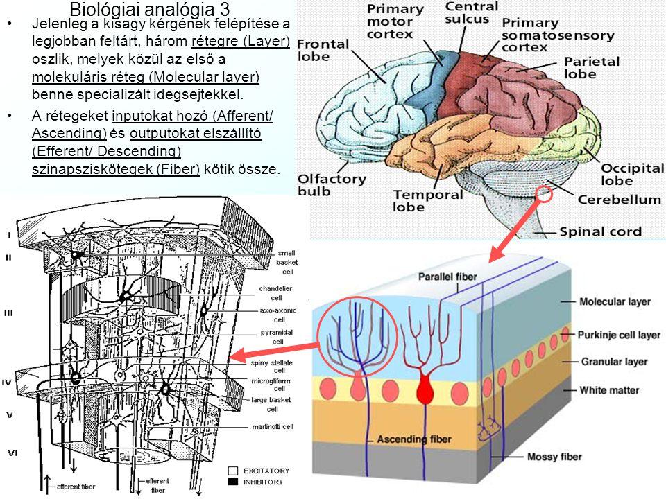 Biológiai analógia 3 Jelenleg a kisagy kérgének felépítése a legjobban feltárt, három rétegre (Layer) oszlik, melyek közül az első a molekuláris réteg (Molecular layer) benne specializált idegsejtekkel.