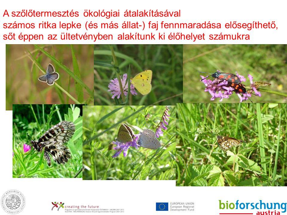 A szőlőtermesztés ökológiai átalakításával számos ritka lepke (és más állat-) faj fennmaradása elősegíthető, sőt éppen az ültetvényben alakítunk ki élőhelyet számukra