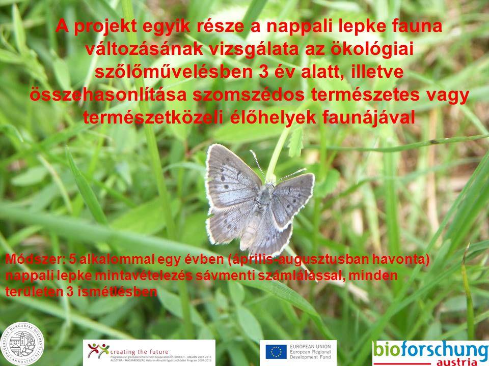 A projekt egyik része a nappali lepke fauna változásának vizsgálata az ökológiai szőlőművelésben 3 év alatt, illetve összehasonlítása szomszédos természetes vagy természetközeli élőhelyek faunájával Módszer: 5 alkalommal egy évben (április-augusztusban havonta) nappali lepke mintavételezés sávmenti számlálással, minden területen 3 ismétlésben