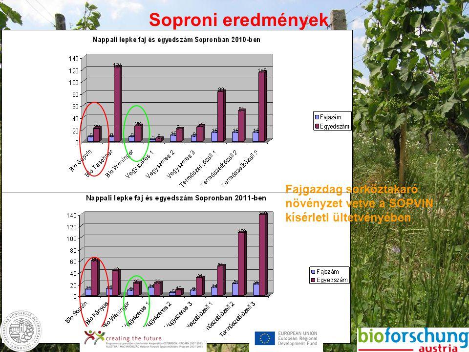 Soproni eredmények Fajgazdag sorköztakaró növényzet vetve a SOPVIN kísérleti ültetvényében