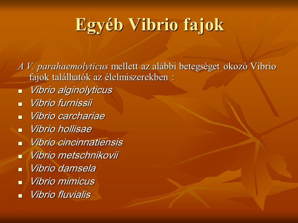 Egyéb Vibrio fajok A V. parahaemolyticus mellett az alábbi betegséget okozó Vibrio fajok találhatók az élelmiszerekben : Vibrio alginolyticus Vibrio a