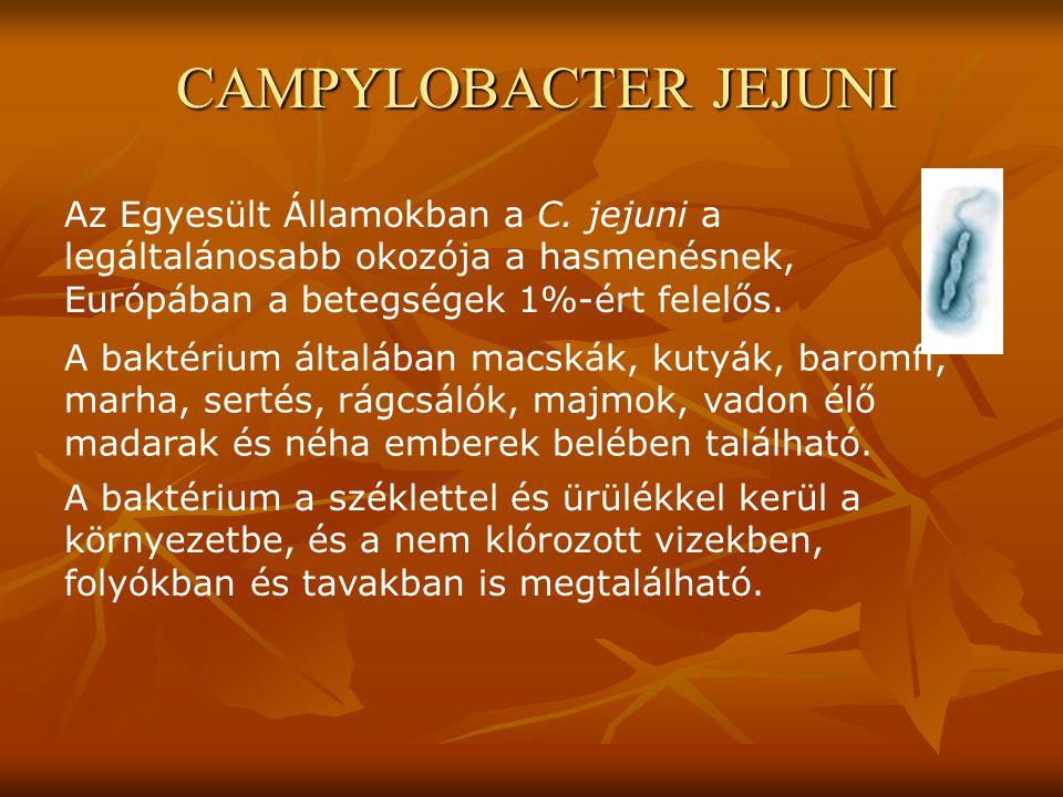 Az Egyesült Államokban a C. jejuni a legáltalánosabb okozója a hasmenésnek, Európában a betegségek 1%-ért felelős. A baktérium általában macskák, kuty