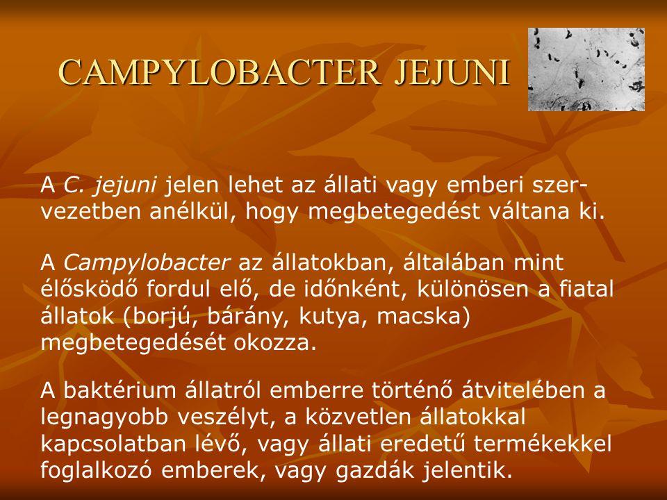 A C. jejuni jelen lehet az állati vagy emberi szer- vezetben anélkül, hogy megbetegedést váltana ki. A Campylobacter az állatokban, általában mint élő