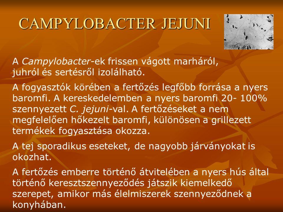 CAMPYLOBACTER JEJUNI A Campylobacter-ek frissen vágott marháról, juhról és sertésről izolálható. A fogyasztók körében a fertőzés legfőbb forrása a nye