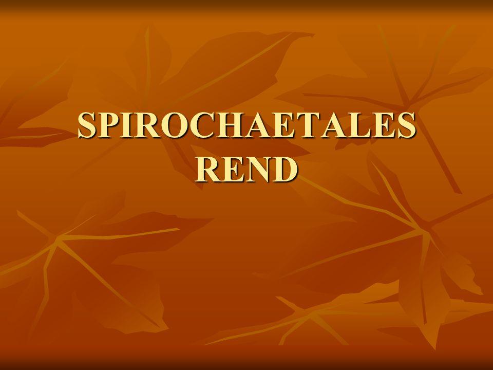 SPIROCHAETALES REND