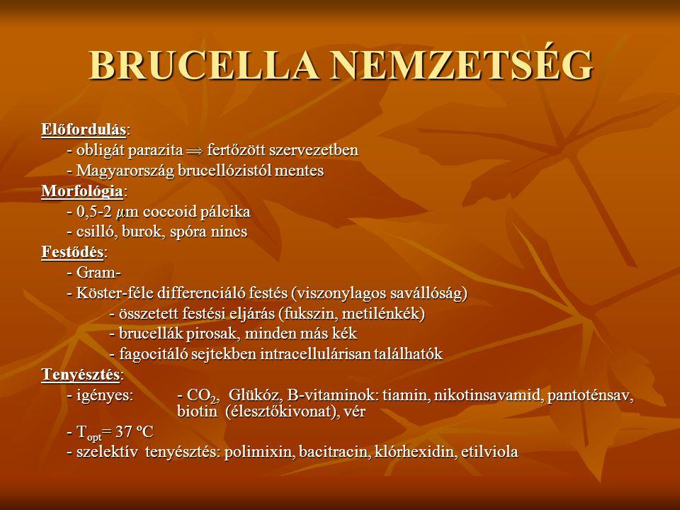 BRUCELLA NEMZETSÉG Biokémia: - obligát aerob, kataláz+, oxidáz+ (kiv.