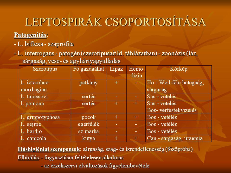 LEPTOSPIRÁK CSOPORTOSÍTÁSA Patogenitás: - L. biflexa - szaprofita - L. interrogans - patogén (szerotípusait ld. táblázatban) - zoonózis (láz, sárgaság