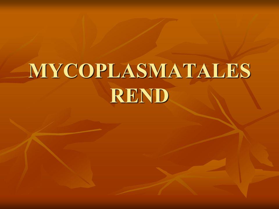 MYCOPLASMATALES REND