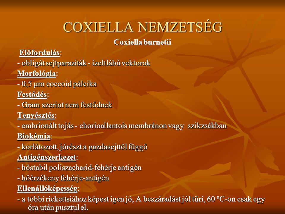 COXIELLA NEMZETSÉG Coxiella burnetii Előfordulás: Előfordulás: - obligát sejtparaziták - ízeltlábú vektorok Morfológia: - 0,5  m coccoid pálcika Fest