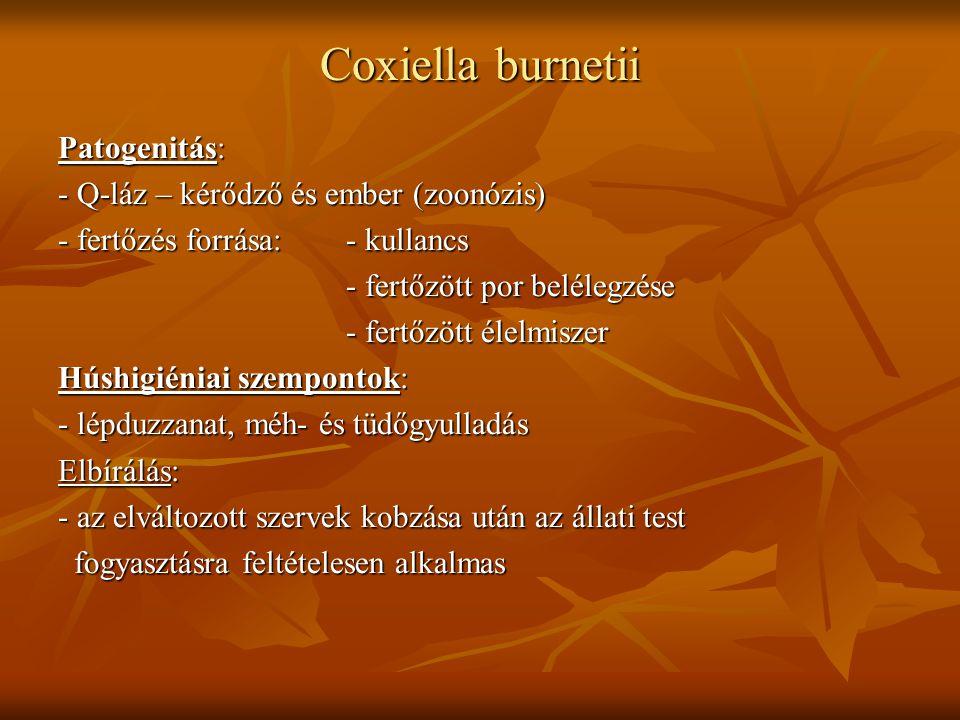Coxiella burnetii Patogenitás: - Q-láz – kérődző és ember (zoonózis) - fertőzés forrása:- kullancs - fertőzött por belélegzése - fertőzött élelmiszer