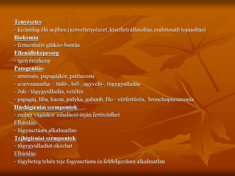Tenyésztés: - kizárólag élő sejtben (szövettenyészet, kísérleti állatoltás, embrionált tojásoltás) Biokémia: - fermentatív glükóz-bontás Ellenállóképe