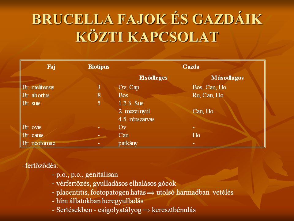 BRUCELLA NEMZETSÉG Húshigiéniai szempontok: - kiegészítő bakteriológiai vizsgálat  vérfertőzés gyanúja, gyulladásos-elhalásos gócok Elbírálás: 1.