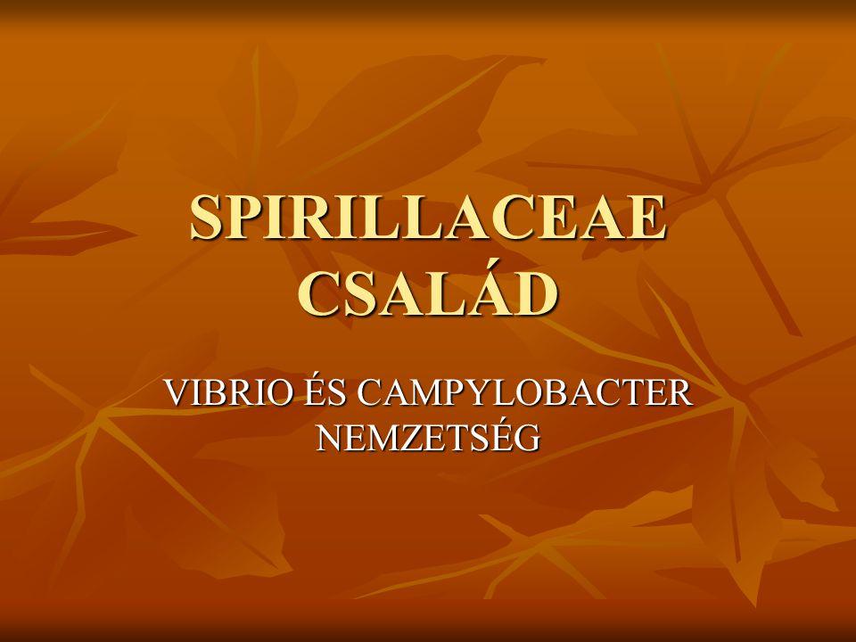 SPIRILLACEAE CSALÁD VIBRIO ÉS CAMPYLOBACTER NEMZETSÉG