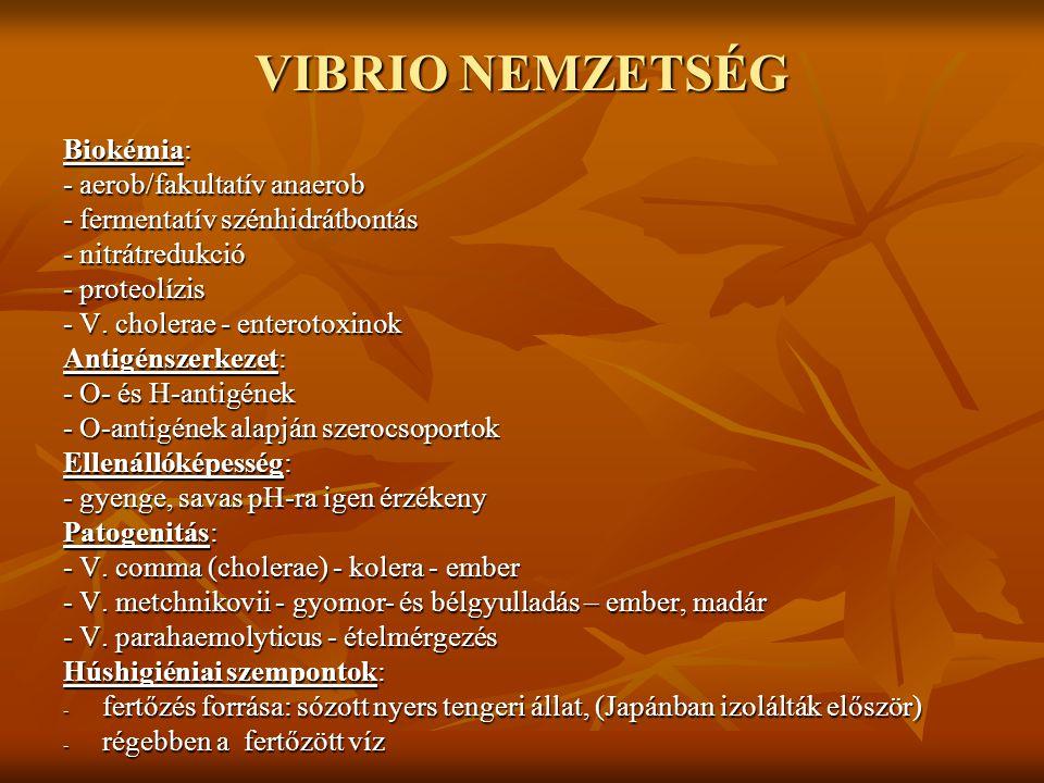 Egyéb Vibrio fajok A V.