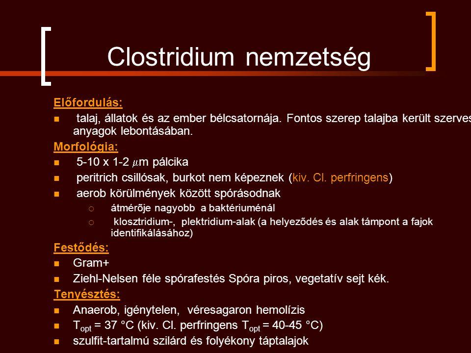 Clostridium nemzetség Előfordulás: talaj, állatok és az ember bélcsatornája. Fontos szerep talajba került szerves anyagok lebontásában. Morfológia: 5-