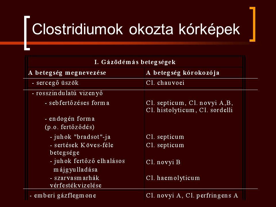 Clostridiumok okozta kórképek