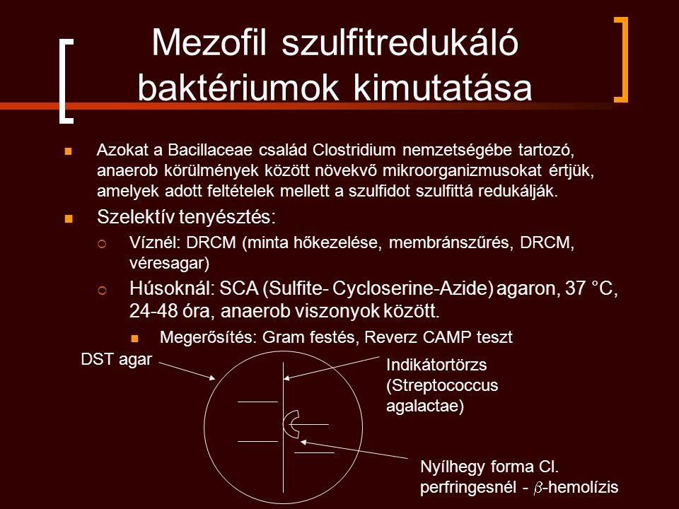 Mezofil szulfitredukáló baktériumok kimutatása Azokat a Bacillaceae család Clostridium nemzetségébe tartozó, anaerob körülmények között növekvő mikroorganizmusokat értjük, amelyek adott feltételek mellett a szulfidot szulfittá redukálják.